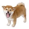 Brawl Sticker Shiba Inu (Nintendogs).png