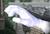 Playable Master Hand SSBM 2.png