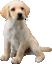 SSBU spirit Labrador Retriever.png
