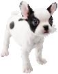 Bulldog_Nintendogs